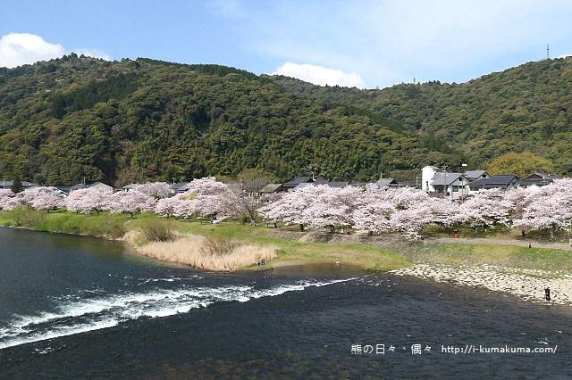 錦帶橋櫻花-3208