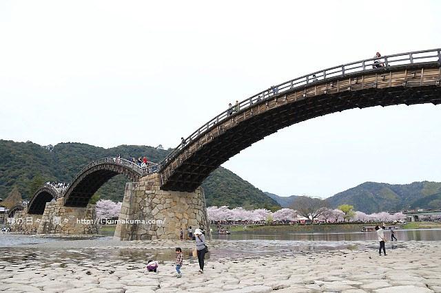 錦帶橋櫻花-4433