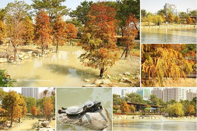 高雄凹子底森林公園落羽松-IMG_0992
