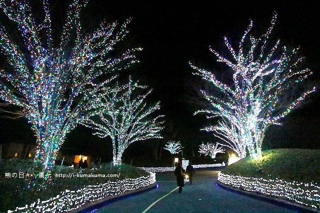 名花之里冬季彩燈-3849