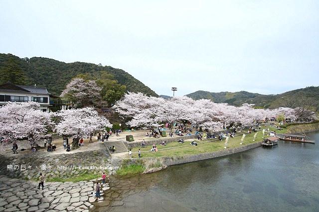 錦帶橋櫻花-4343