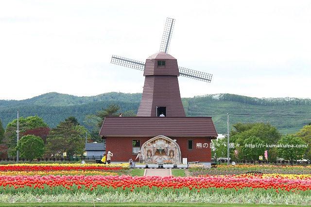 上湧別鬱金香公園--5160