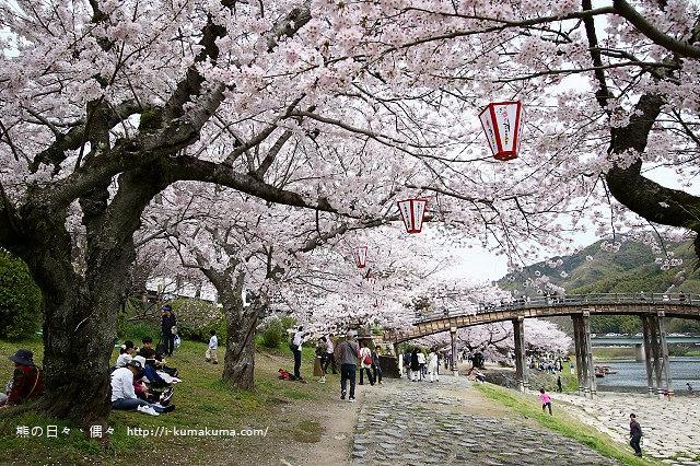 錦帶橋櫻花-4302