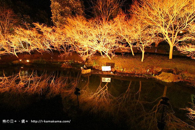 名花之里冬季彩燈-3816