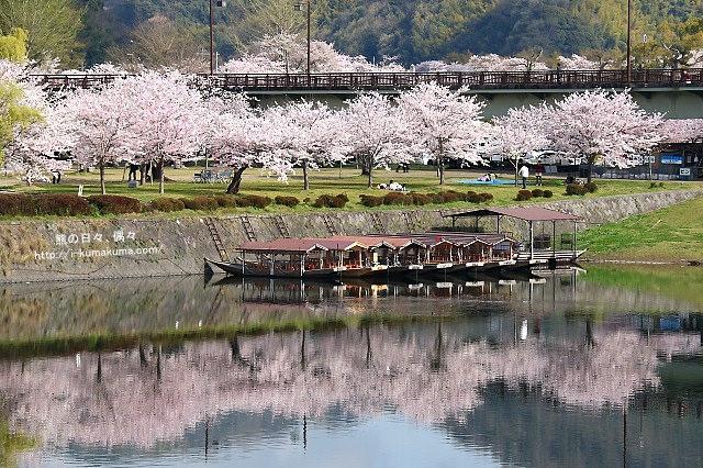 錦帶橋櫻花-3108