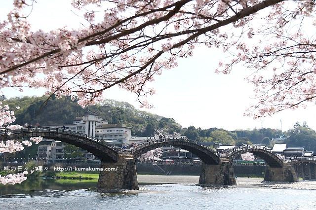 錦帶橋櫻花-3414