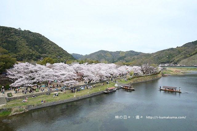 錦帶橋櫻花-4350