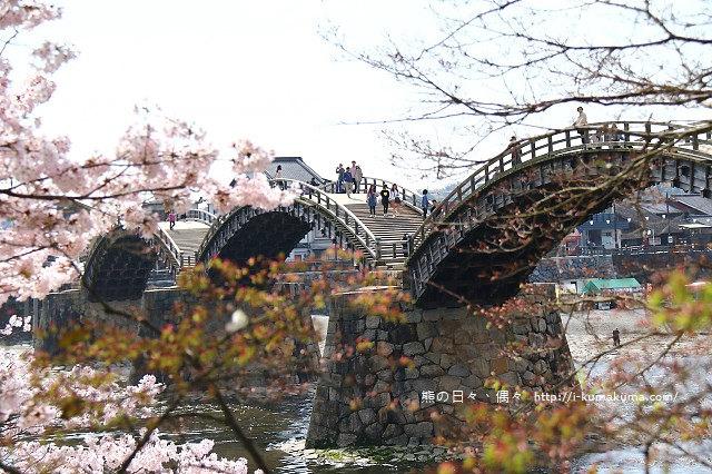 錦帶橋櫻花-3442