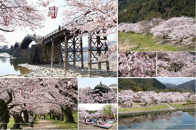錦帶橋櫻花-3028