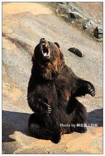 北海道登別熊牧場-05