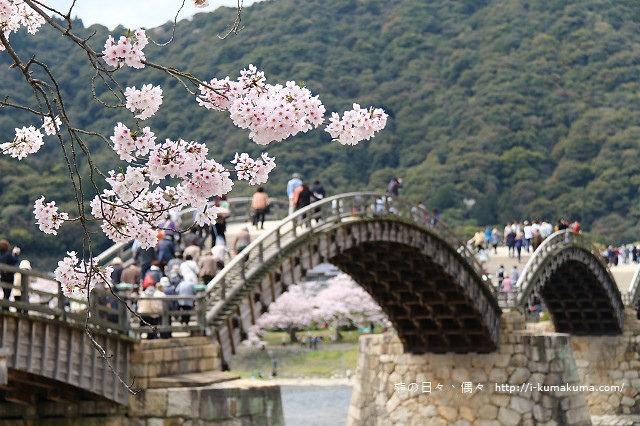 錦帶橋櫻花-4392