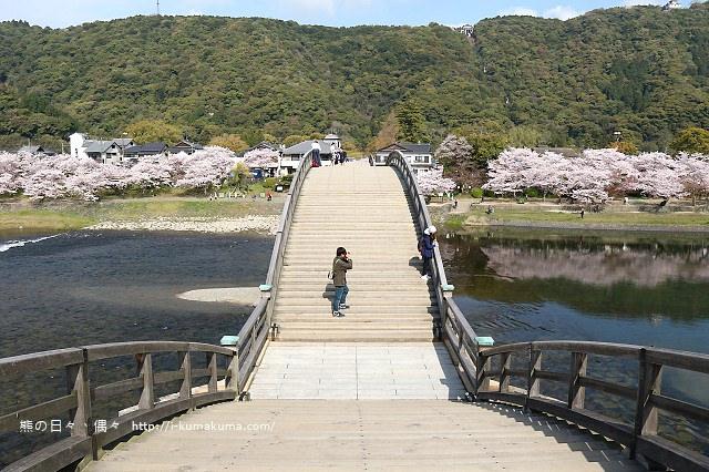錦帶橋櫻花-3172