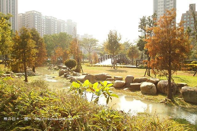 高雄凹子底森林公園落羽松-IMG_1054