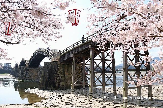 錦帶橋櫻花-3329