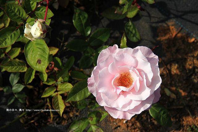 南投29號花園-6051