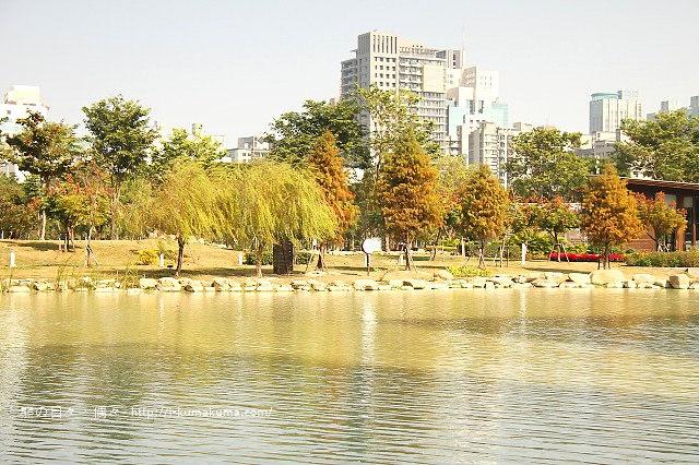 高雄凹子底森林公園落羽松-IMG_1387