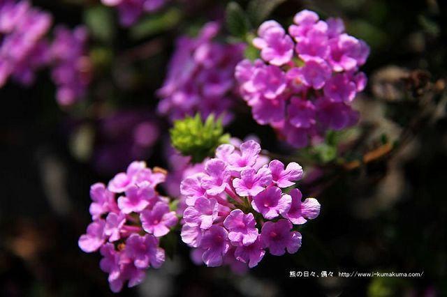 南投29號花園-6183