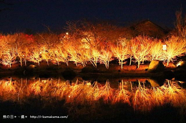 名花之里冬季彩燈-3022