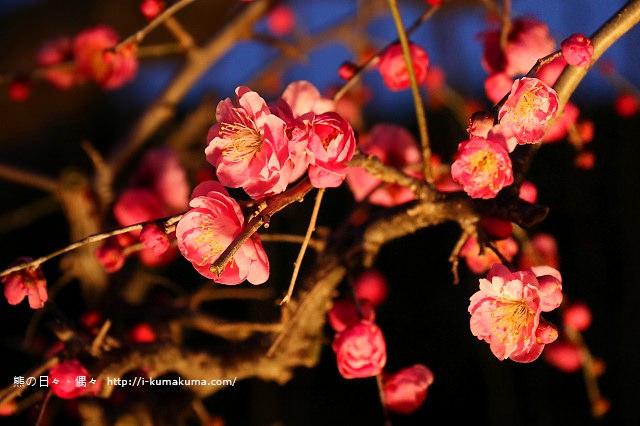 名花之里冬季彩燈-2903