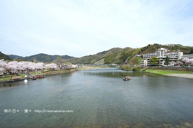 錦帶橋櫻花-4357
