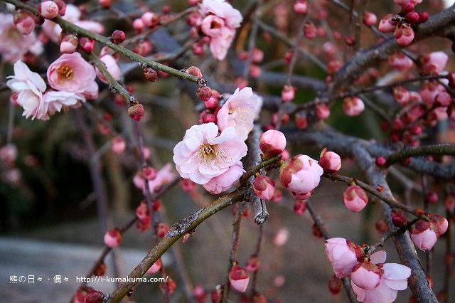 名花之里冬季彩燈-2851