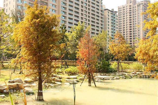 高雄凹子底森林公園落羽松-IMG_1612