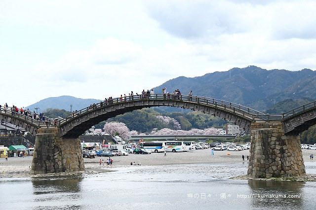 錦帶橋櫻花-4236