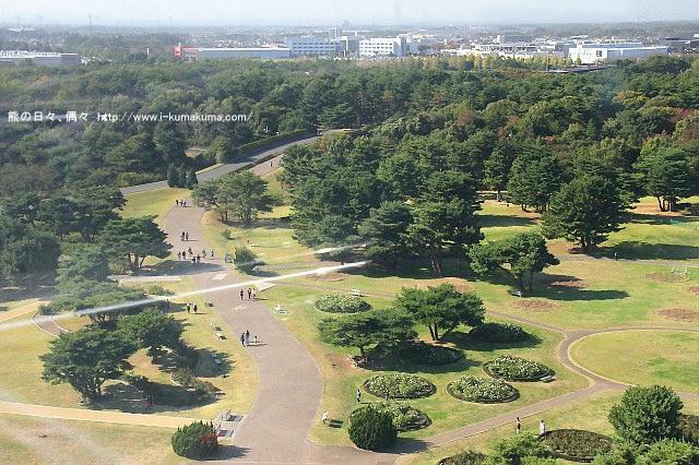 茨城國營日立海濱公園掃帚草-IMG_4120