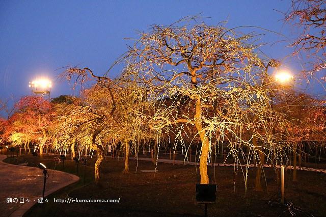 名花之里冬季彩燈-2951