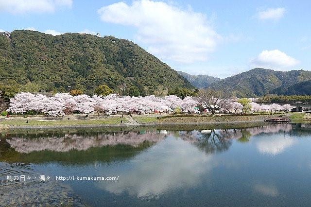 錦帶橋櫻花-3165