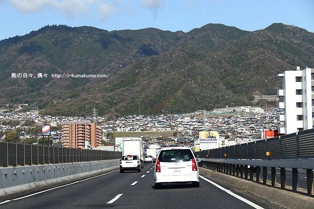 錦帶橋櫻花-3029