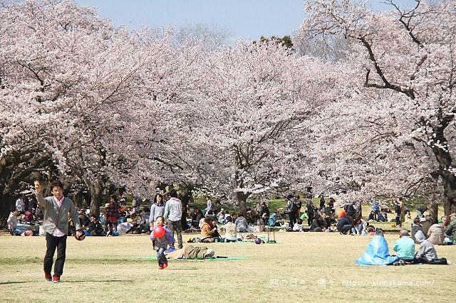 國營昭和紀念公園櫻花-7050