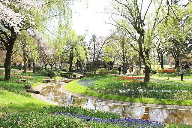 國營昭和紀念公園櫻花-7087