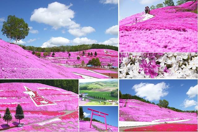 東藻琴芝櫻公園-5943
