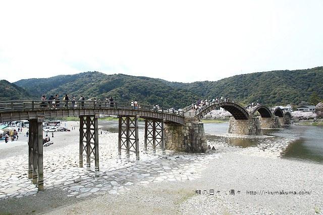 錦帶橋櫻花-4371