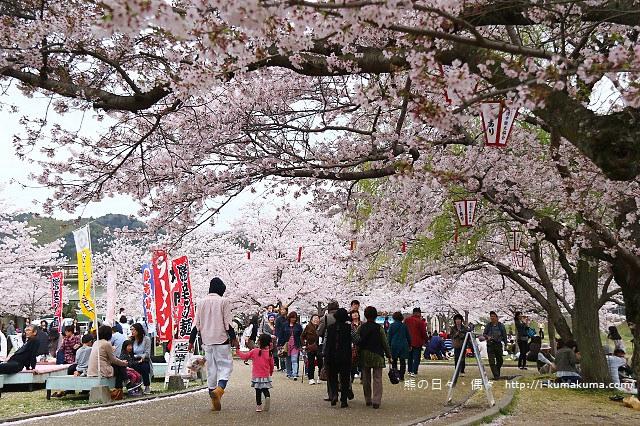錦帶橋櫻花-4228