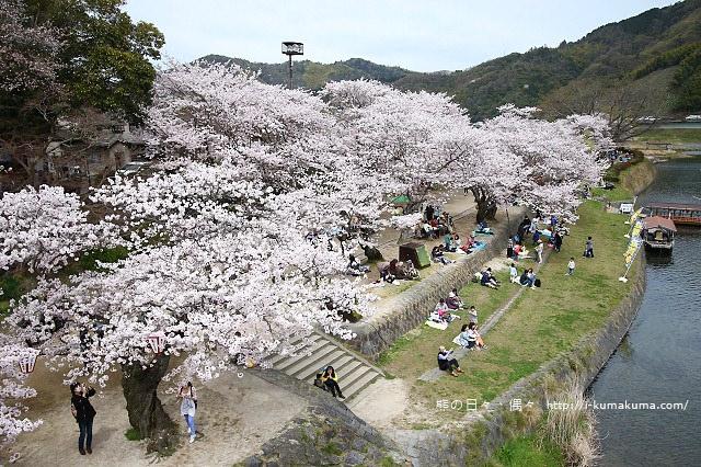 錦帶橋櫻花-4327