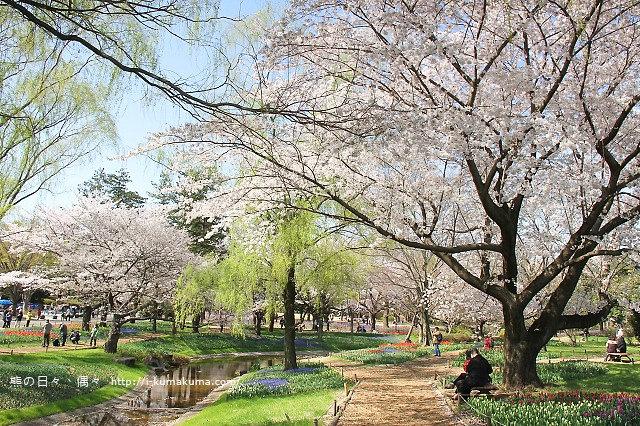 國營昭和紀念公園櫻花-7094