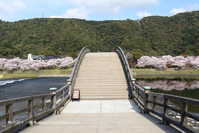 錦帶橋櫻花-3141