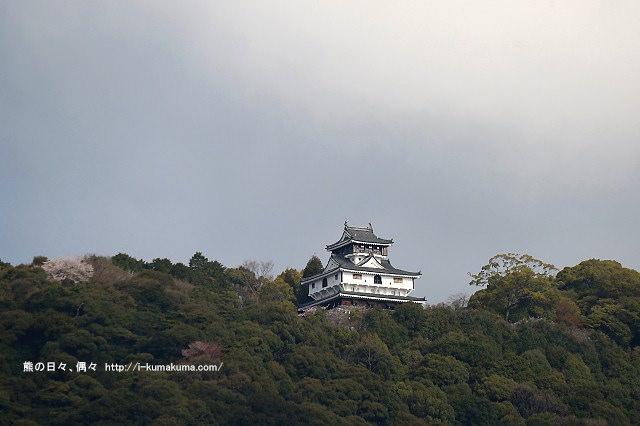 錦帶橋櫻花-3064