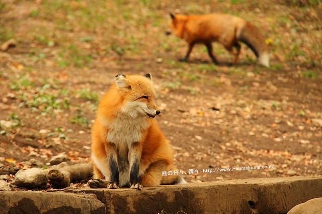 藏王狐狸村-IMG_0175