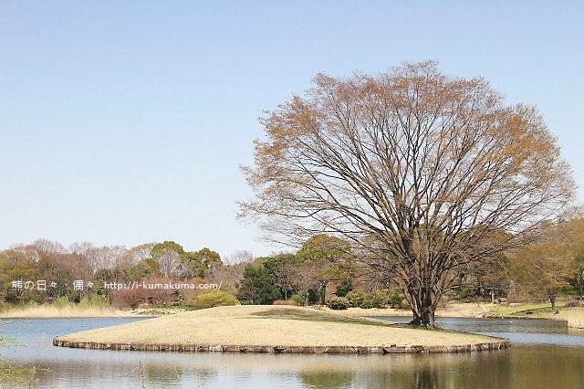 國營昭和紀念公園櫻花-6324