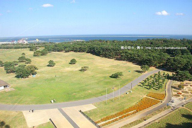 茨城國營日立海濱公園掃帚草-IMG_4168