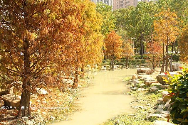高雄凹子底森林公園落羽松-IMG_1701