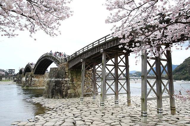 錦帶橋櫻花-4274