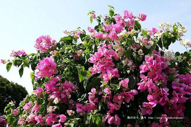 台南林家園藝咖啡-1287