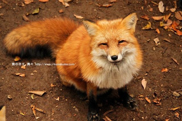 藏王狐狸村-IMG_0318