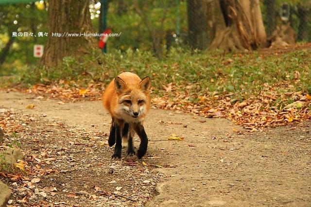 藏王狐狸村-IMG_0606