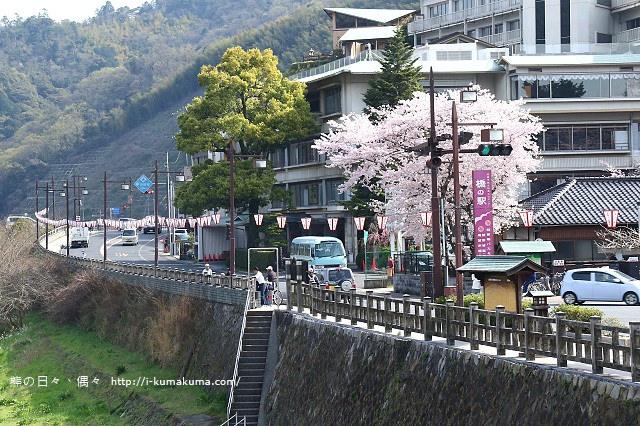 錦帶橋櫻花-3132