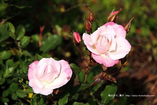 南投29號花園-6042